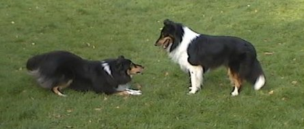 Ronja and Breezy playing