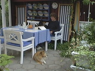 The covered area of our yard - a cosy spot in summer. This is my mum, the tricolour on the bench next to her is Ronja, and the sable in front is Tilda. Rea is under the table, only feet showing. Breezy is probably out chasing some birds away from the lawn.